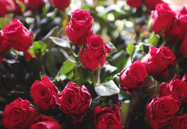 flores, rosas vermelhas, dia dos namorados (Foto: Pexels)