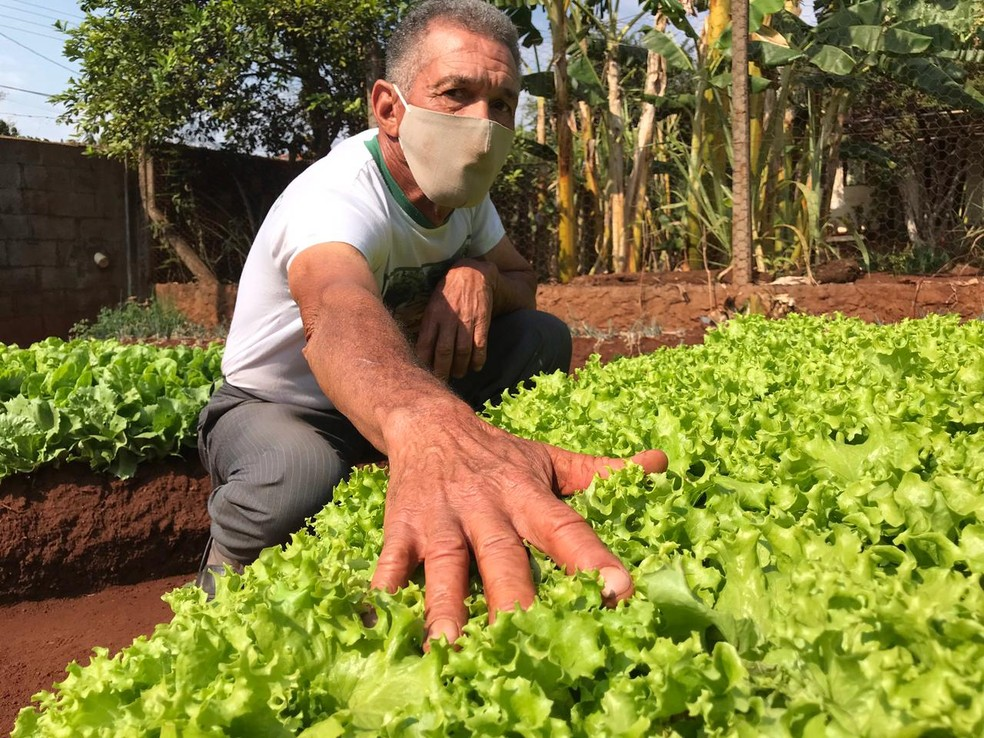 Aposentado cultiva as verduras que são doadas para moradores em Bocaina  — Foto: Rafael Ferraz / TV TEM