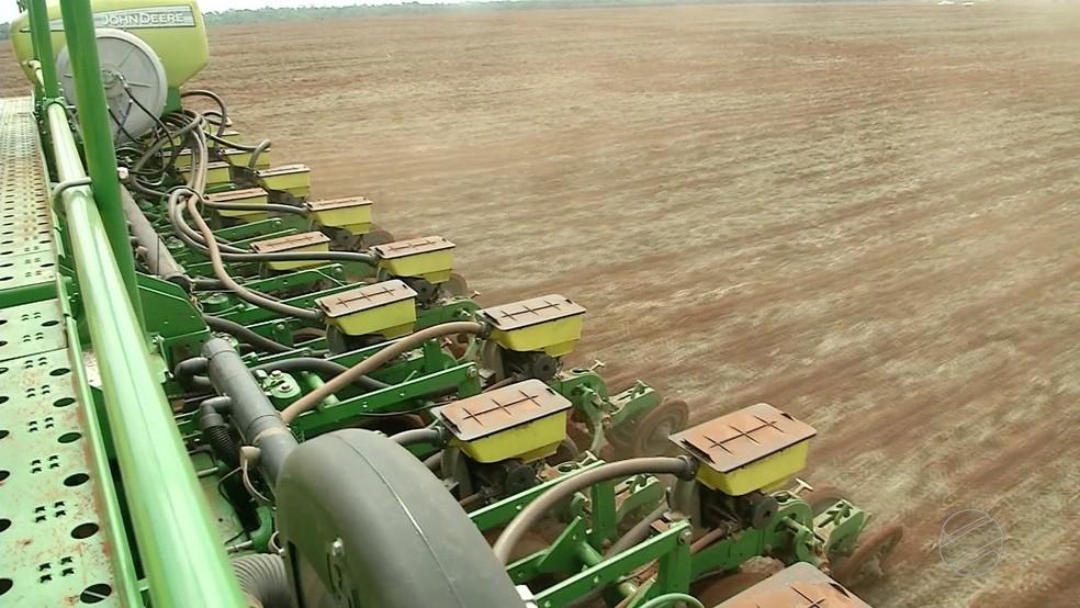 A expectativa é de aumento da área plantada em todo o estado — Foto: TVCA/Reprodução