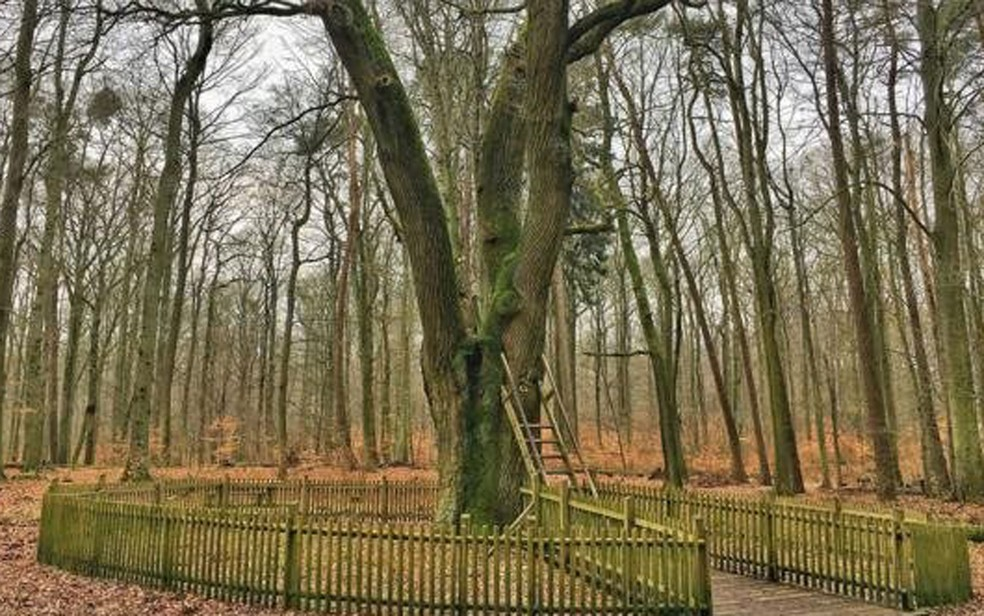 Uma escada de 3m de altura leva ao pequeno buraco na árvore, onde são depositadas as cartas de amor (Foto: Eliot Stein)