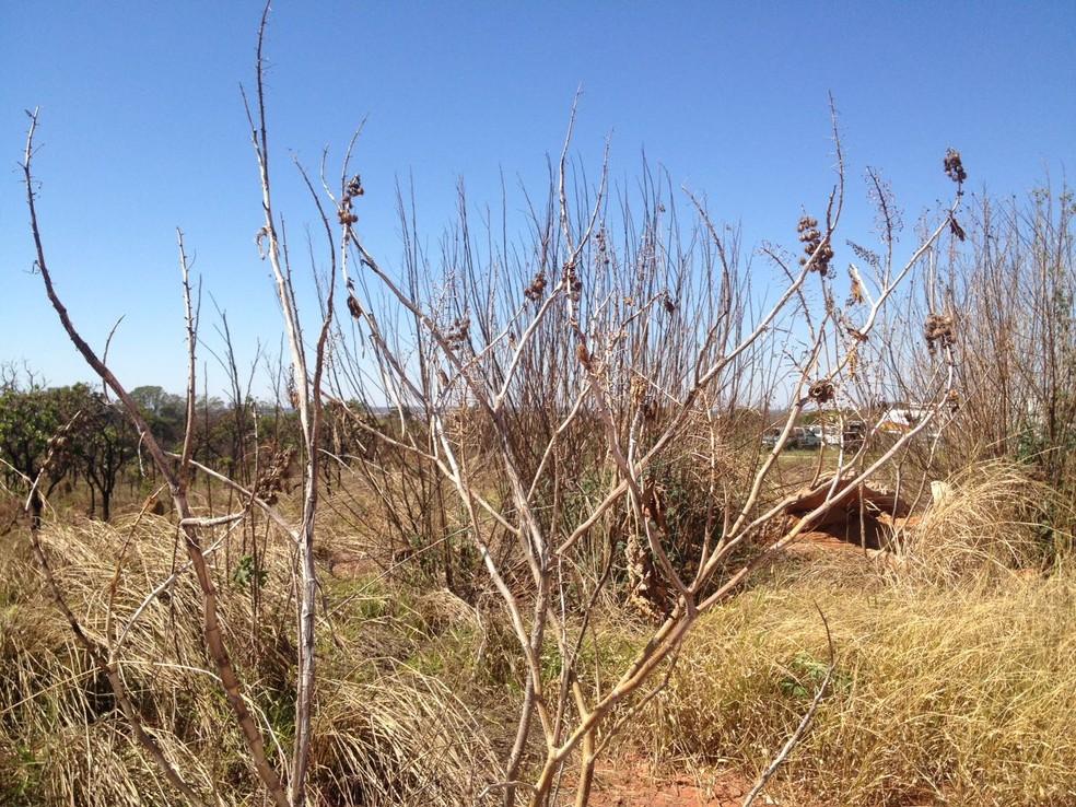 Vegetação seca em área do Guará II, no DF — Foto: Bianca Marinho/G1
