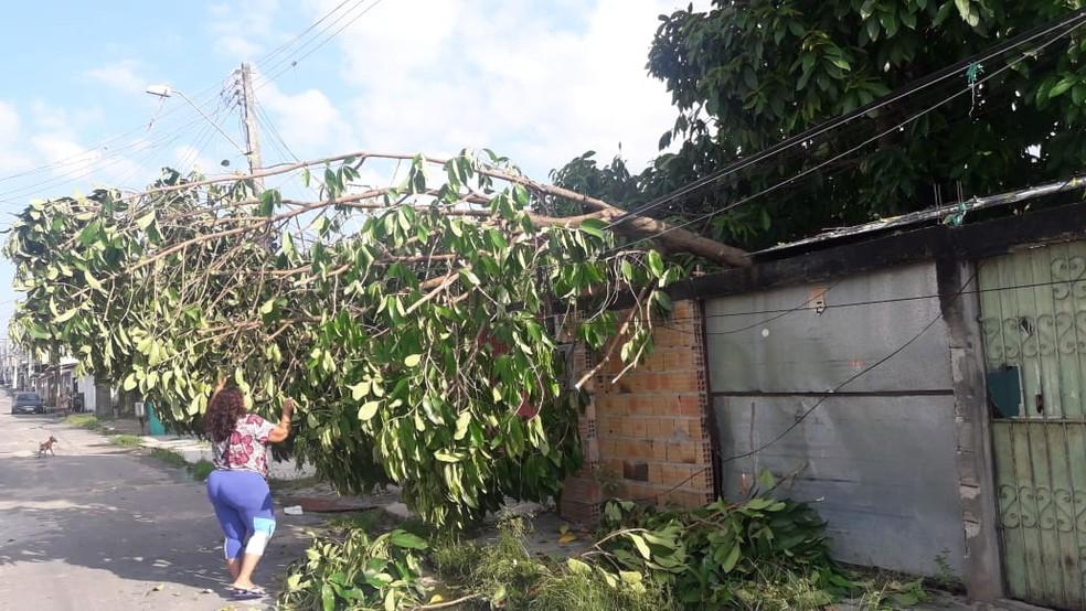 Árvores tombadas e destelhamento de casas foram registrados.  — Foto: Meike Farias/Rede Amazônica