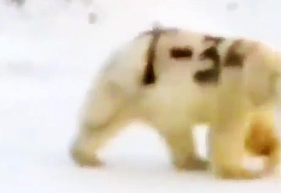 Detalhe de inscrição num urso polar — Foto: Reprodução/Sergei Kravy/Facebook