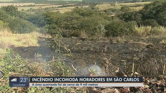 Mata é atingida por incêndio no Jardim Medeiros em São Carlos