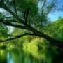 Papel de Parede: Green Lake