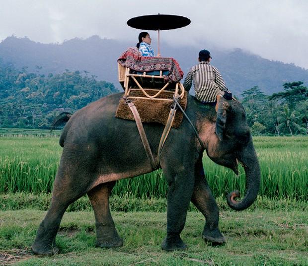 Passeio de elefante  (Foto: Cortesia Aman e Divulgação)