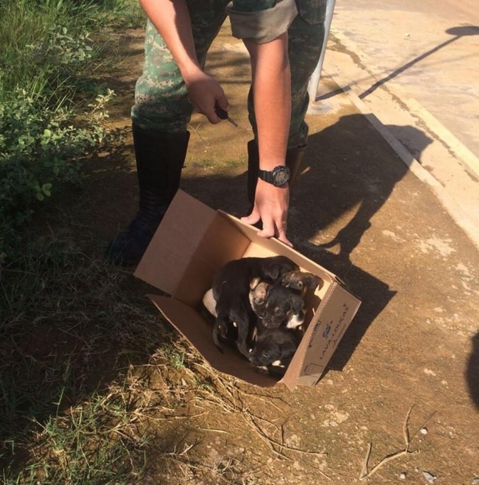 -  Segundo a polícia, os filhotes foram levados para o Centro de Zoonozes e poderão ser adotados  Foto: Polícia Militar Meio Ambiente