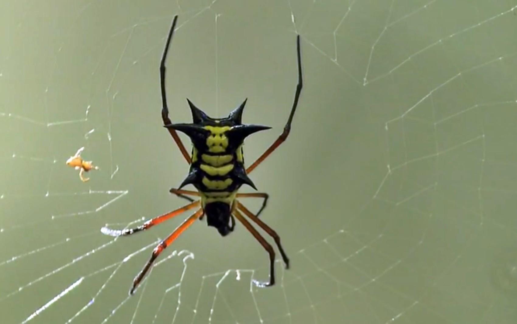 Homem de 35 anos é internado em UTI após ser picado por aranha em São Tomé das Letras, MG
