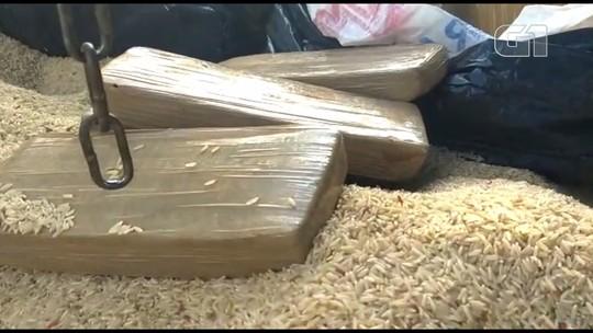 Denarc de Maringá apreende maconha escondida em carga de arroz
