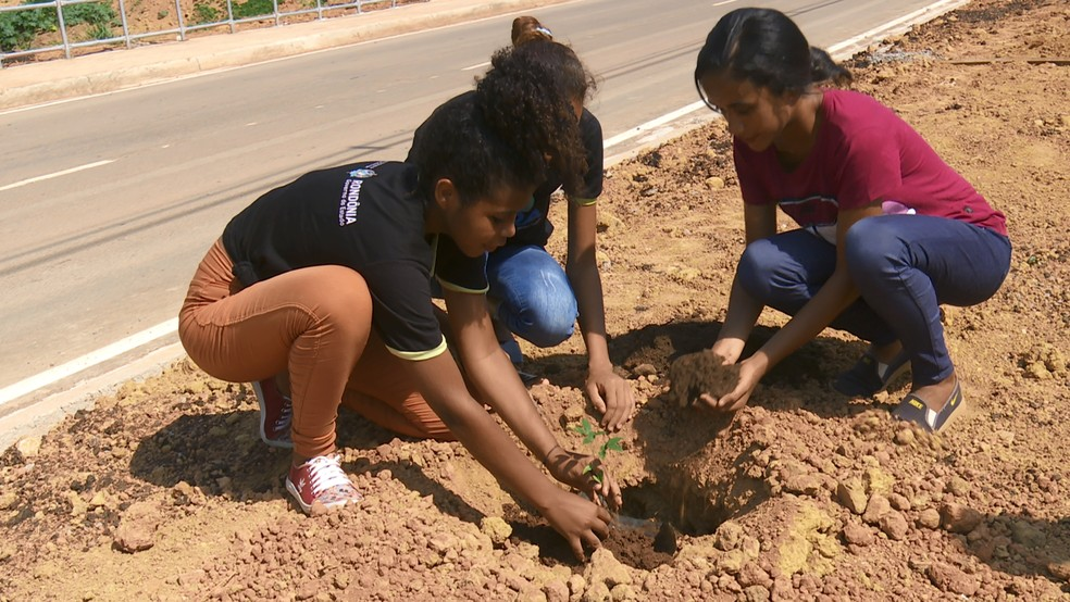 Projeto de arborização planta mais de 500 mudas em avenida recém-asfaltada de Ariquemes, — Foto: Rede Amazônica/Reprodução