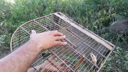 Operação apreende quase 200 aves silvestres durante operação em municípios de AL