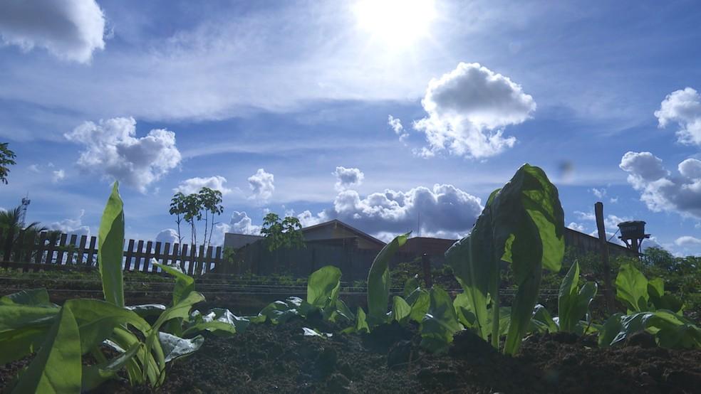 Apoesentado ajuda a criar horta em UBS de Ariquemes (Foto: Rede Amazônica/Reprodução)
