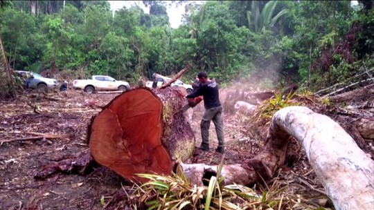 Após PM, ICMBio suspende ações de fiscalização no sudeste do Pará