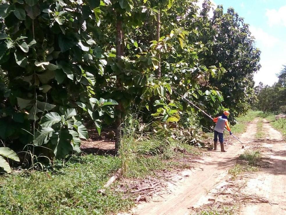 Ônibus leva e busca funcionários em plantação de teca diariamente — Foto: Sesp-MT/ Assessoria