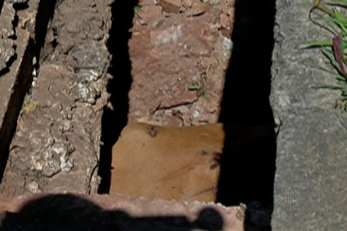 Buraco se abre em calçada e vaca passa noite presa em buraco em Mogi das Cruzes