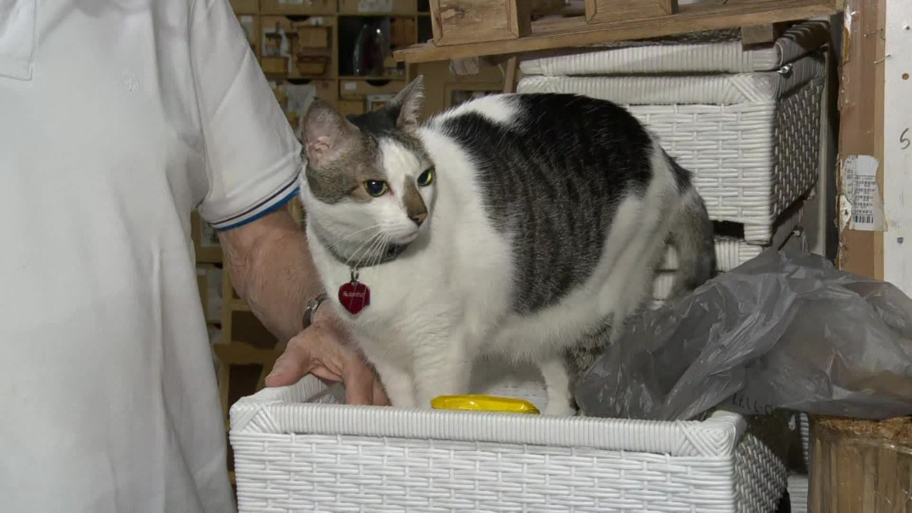 Justiça garante direito de ir e vir de gato em shopping no Rio