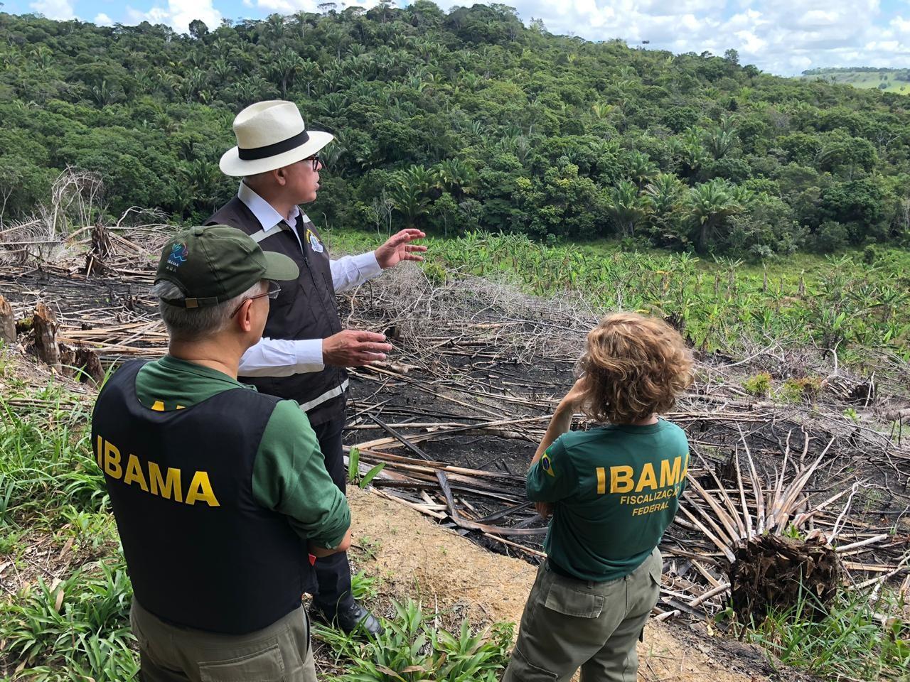 Operação contra o desmatamento da Mata Atlântica é realizada em Alagoas  - Notícias - Plantão Diário