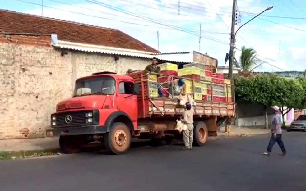 Moradores de Bastos pegavam as galinhas diretamente em caminhões estacionados no centro da cidade (Foto: Arquivo pessoal)
