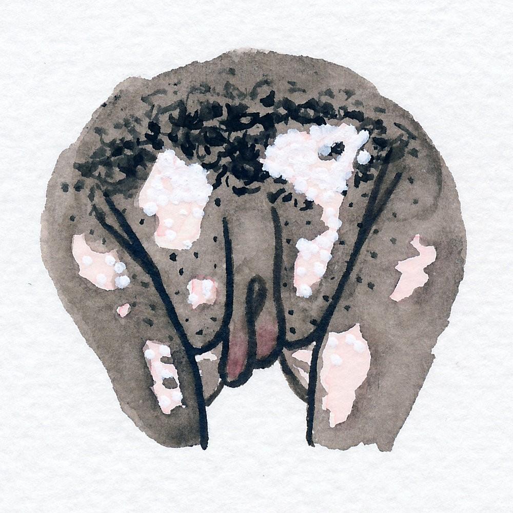 Cheiro de vagina (Foto: Reprodução @the.vulva.gallery)