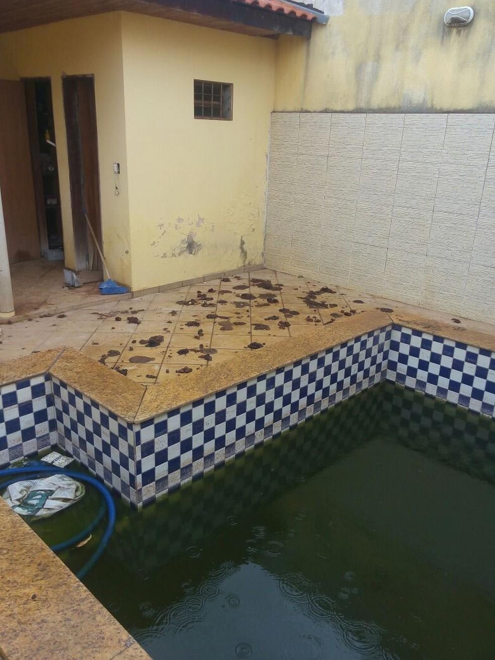 Cães não tinham água nem comida na casa desocupada (Foto: Cedida/Polícia Militar Ambiental)