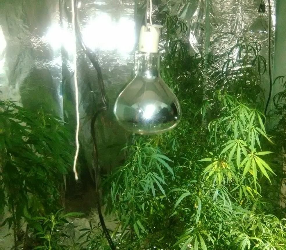 Estufa possuía sistema de iluminação e ventilação, em Presidente Prudente (Foto: Polícia Militar/Cedida)