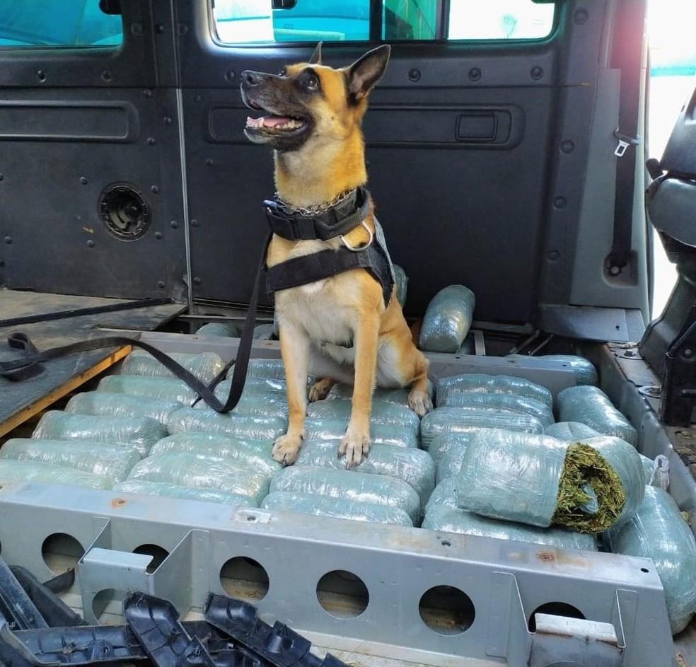 Maconha estava escondida em van abordada pela PRF na BR-304, em Macaíba — Foto: Divulgação/PRF
