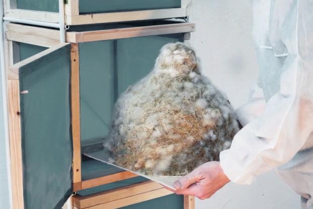 Passo a passo. Feitas a partir de cogumelos e restos de materiais da indústria têxtil, as luminárias da série Myx levam entre 2 e 3 semanas para chegar à versão final (Foto: Judith Klingenfeld / Divulgação)