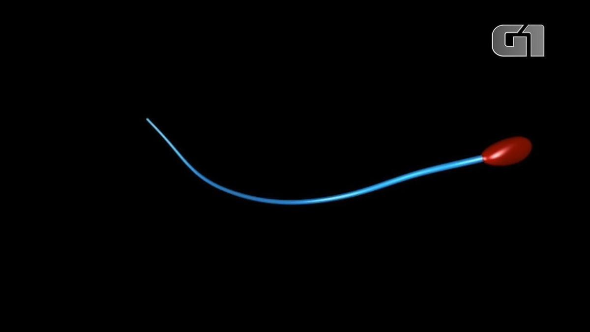 A surpreendente forma como os espermatozoides realmente nadam – G1