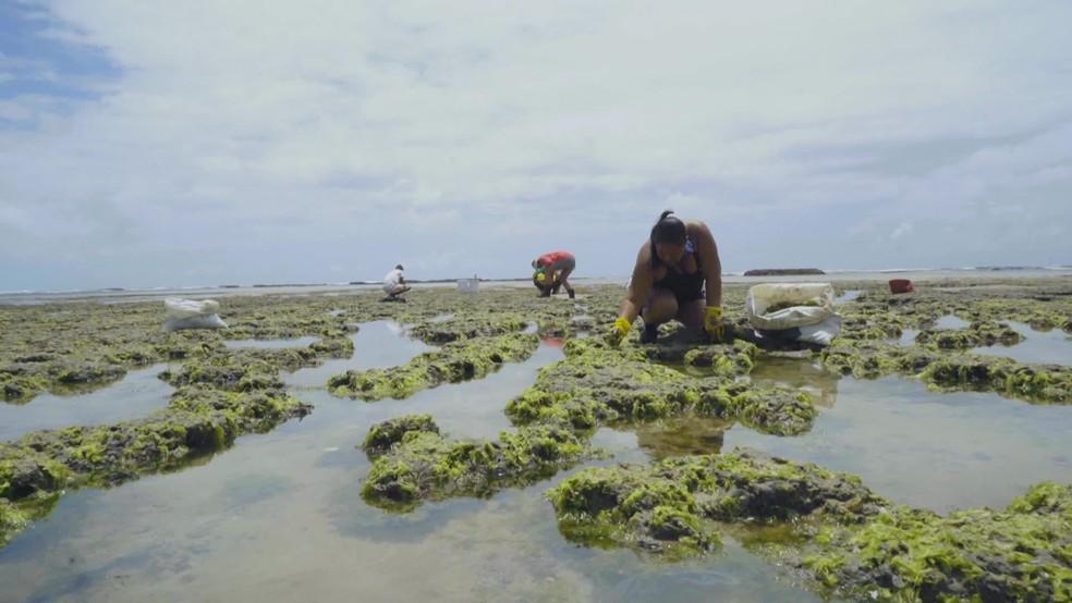 Voluntários removem óleo de corais na Praia do Paiva, no Cabo de Santo Agostinho — Foto: Reprodução/TV Globo