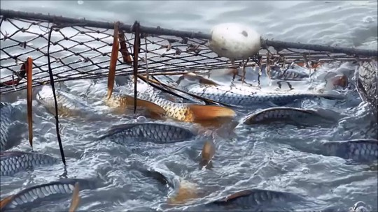Produção de peixe cresce no país e consumo pode aumentar ainda mais
