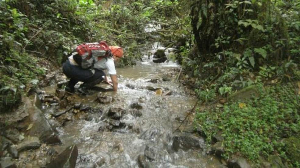 Expedição procurou sapos em riachos de florestas  — Foto: Stephanie Knoll, Museu de História Natural Alcide D'Orbigny (via BBC)