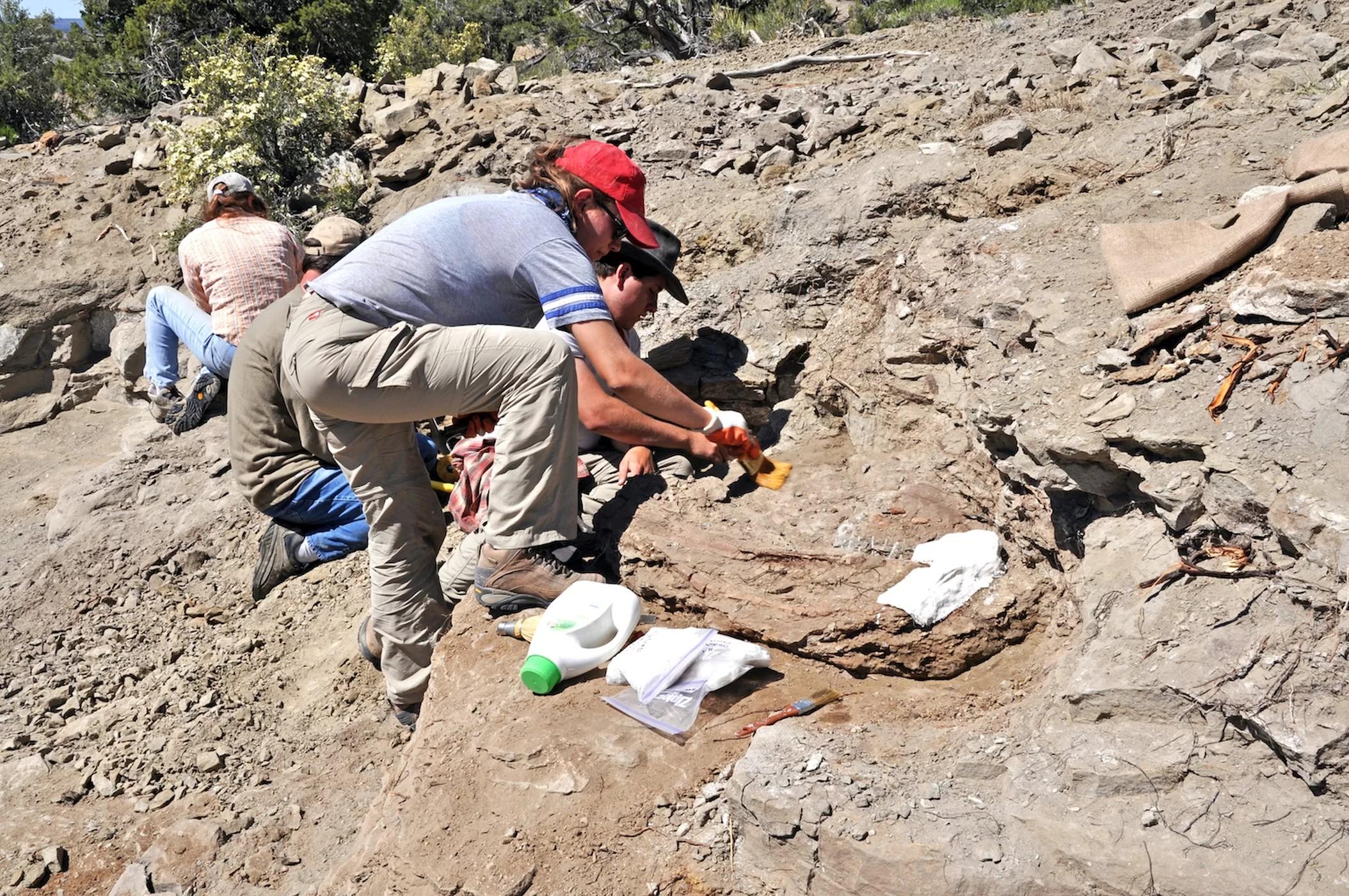 Escavação do fóssil do Akainacephalus johnsoni em Utah, nos Estados Unidos (Foto: Randall Irmis/ NHMU)