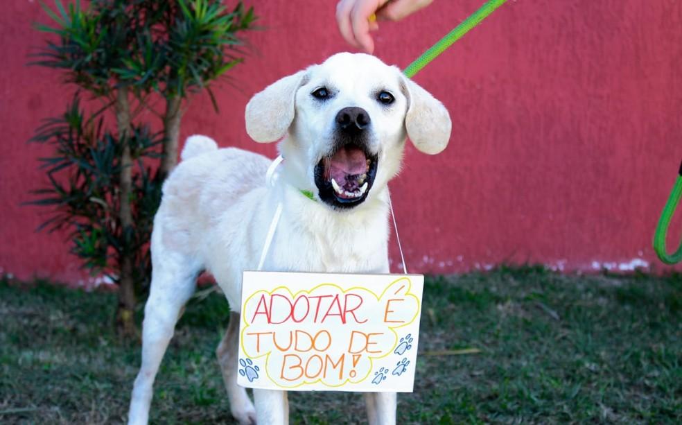Campanha adoção Taubaté (Foto: ONG Chico Pata/Soraya Reis)