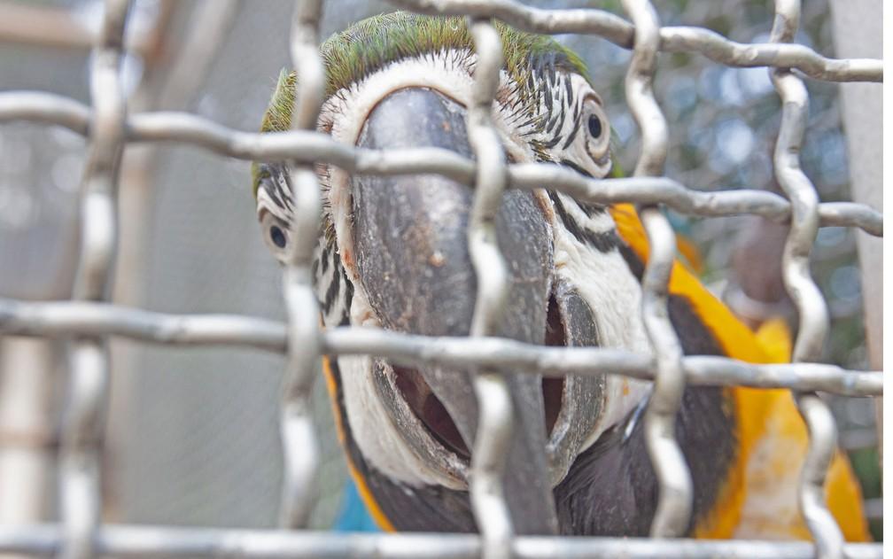 Ave se recupera no CRAS (Centro de Recuperação de Animais Silvestres) do Parque Tietê, Zona Leste de São Paulo — Foto: Deslange Paiva/G1