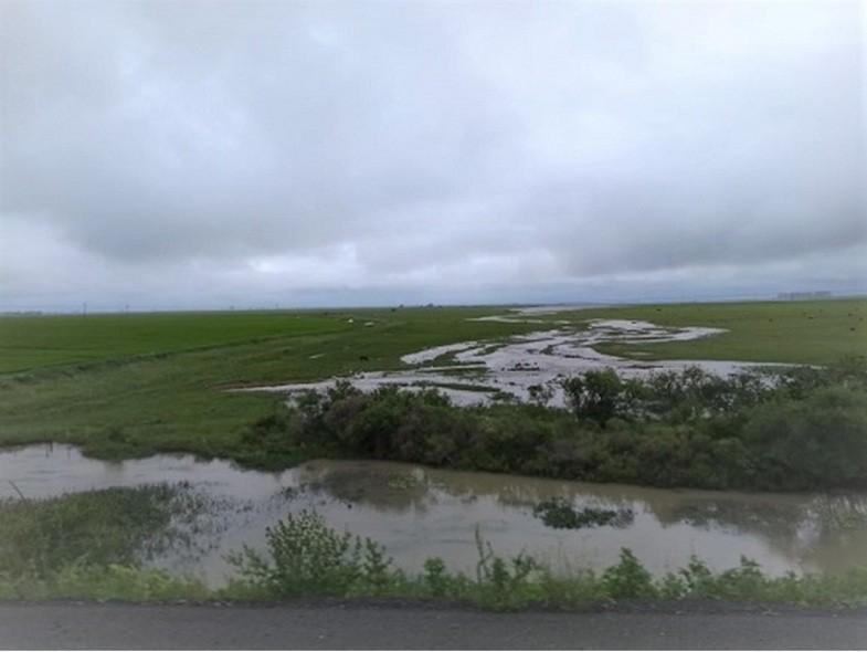agricultura-arroz-emater (Foto: Emater/RS)