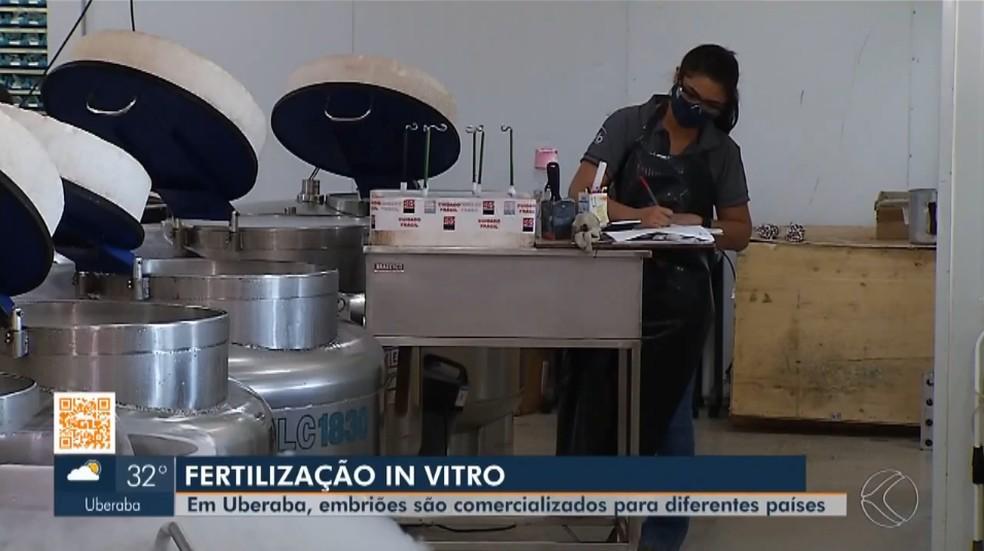 Fertilização In Vitro revoluciona pecuária no Triângulo Mineiro e Alto Paranaíba — Foto: TV Integração/Reprodução