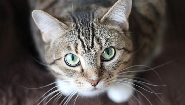 gato (Foto: Pexels)