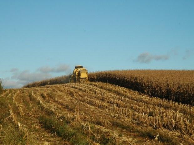 Safra de verão para SC tem estimativa de aumento na produção de milho e soja