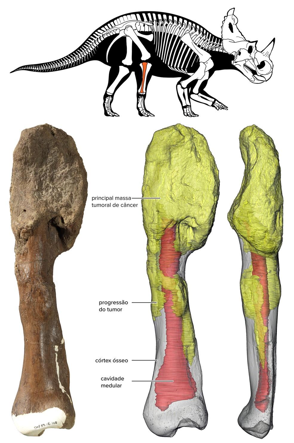 ilustração mostra avanço do câncer na fíbula do Centrosaurus — Foto: Divulgação/Museu Real de Ontário e Universidade McMaster