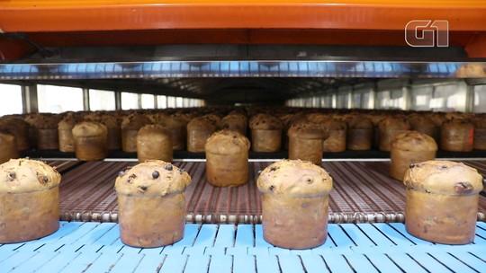 Do fermento à caixinha, veja como é feito o panetone na maior fábrica do país