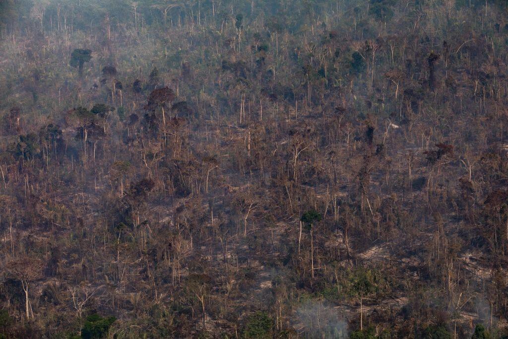 desmatamento na amazônia, foco de incêndio na amazônia, queimadas (Foto: Victor Moriyama/Getty Images)