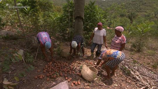 Mulheres transformam vida de comunidade com coco de babaçu