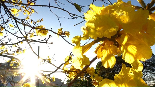 A primavera chega neste sábado no 'Meu Paraná'