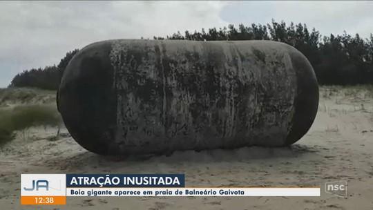 Boia gigante é encontrada em praia  no Litoral Sul de SC