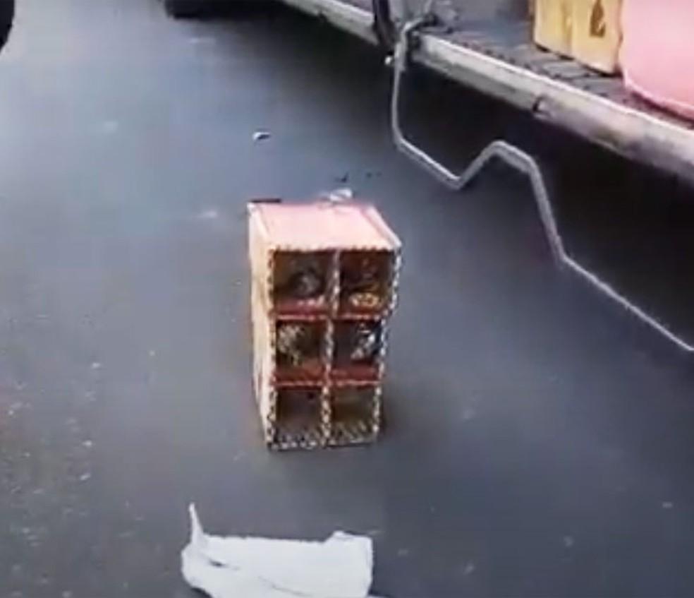Aves silvestres transportadas irregularmente são resgatadas pela PRF na Bahia — Foto: Divulgação/PRF