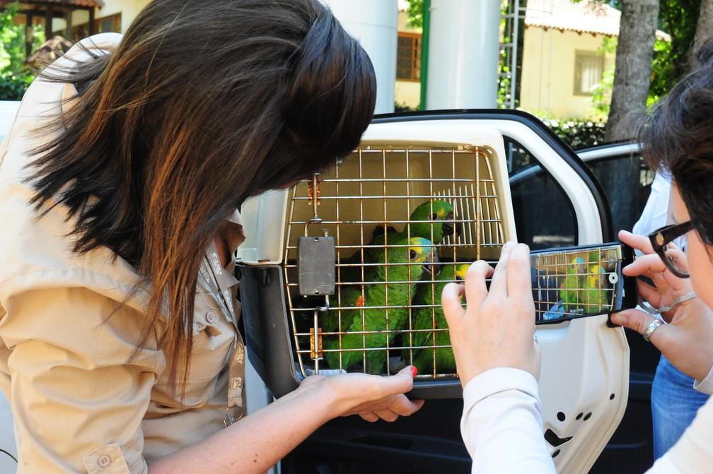 Profissionais de várias especialidades se dedicam a proporcionar condições de recuperação e convivência harmoniosa aos animais recuperados, no Parque das Aves — Foto: Divulgação/Parque das Aves