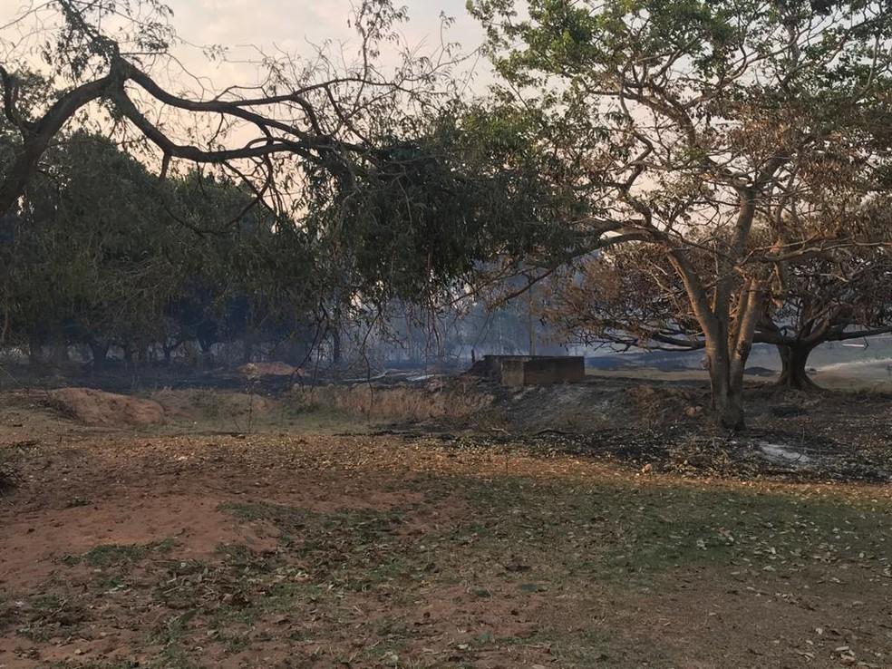 Incêndio que começou na rodovia em Borborema atingiu propriedades rurais — Foto: Tiago Luís Detogni / Arquivo pessoal