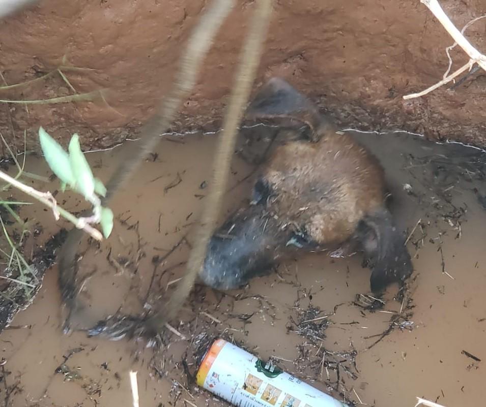 Bombeiros resgatam cachorro que caiu em poço abandonado em Rio Branco