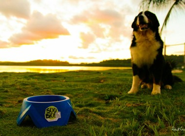 biobowl-comedouro-cachorro-mamona (Foto: Roberto Chaussê)