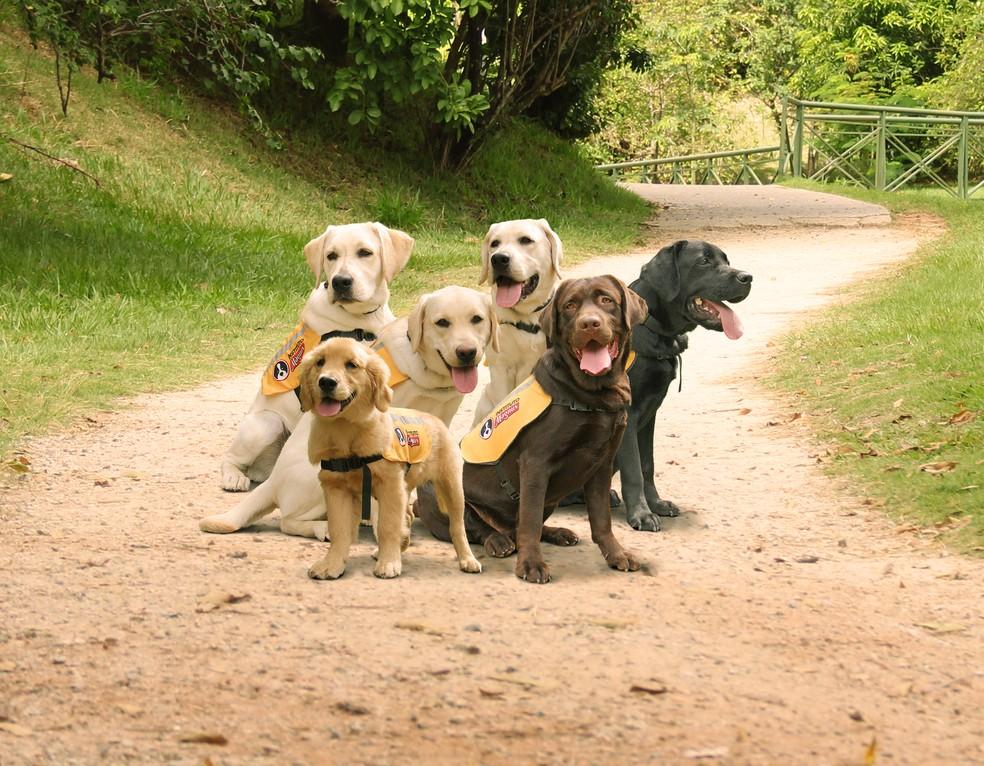 Nos próximos anos, Instituto Magnus poderá formar até 60 cães-guias por ano (Foto: Divulgação)